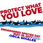 Endangered Species Day Friday Harbor